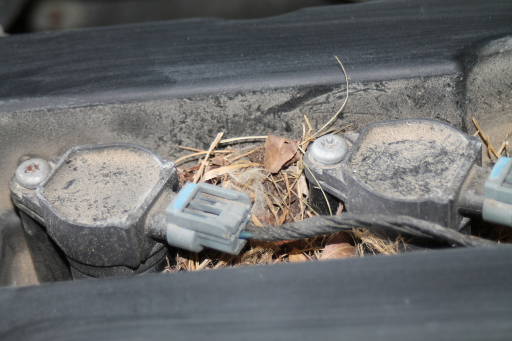 How to Stop Rodents from Hibernating in Your Classic Car - Wilson's